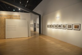 ACCOLADES AWARDED IN 9TH EMIRATES PHOTOGRAPHY COMPETITION