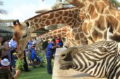 Have a Unique Getaway Experience at Emirates Park Zoo and Resort